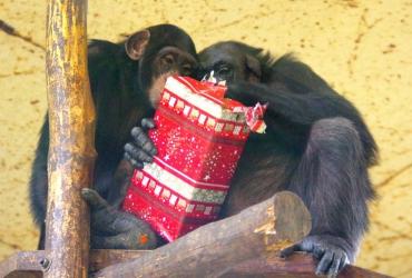 Boldog Karácsonyt Kíván az állatkert