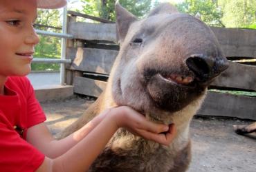 A  2017. évi Zoo Táboros képek honlapunkon megtekinthetőek