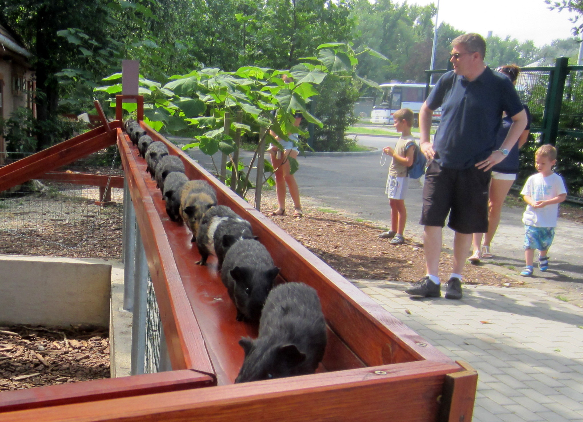 Guinea pig train in Zoo Győr (photo source: www.zoogyor.com)